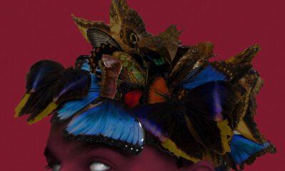 sobel pułapka na motyle okładka